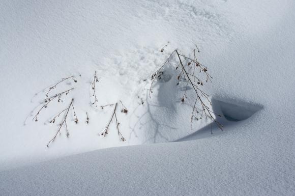 zen snow twigs-04343