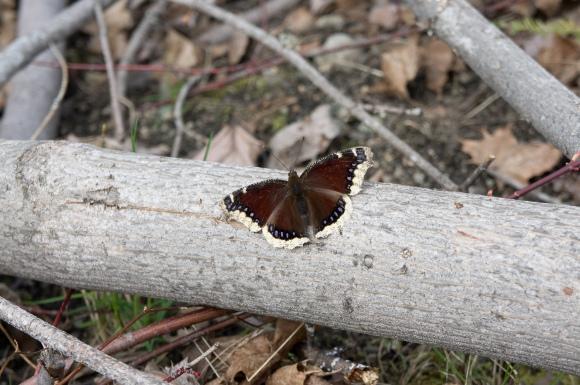butterfly-04491