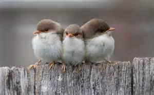 small birds follow the night